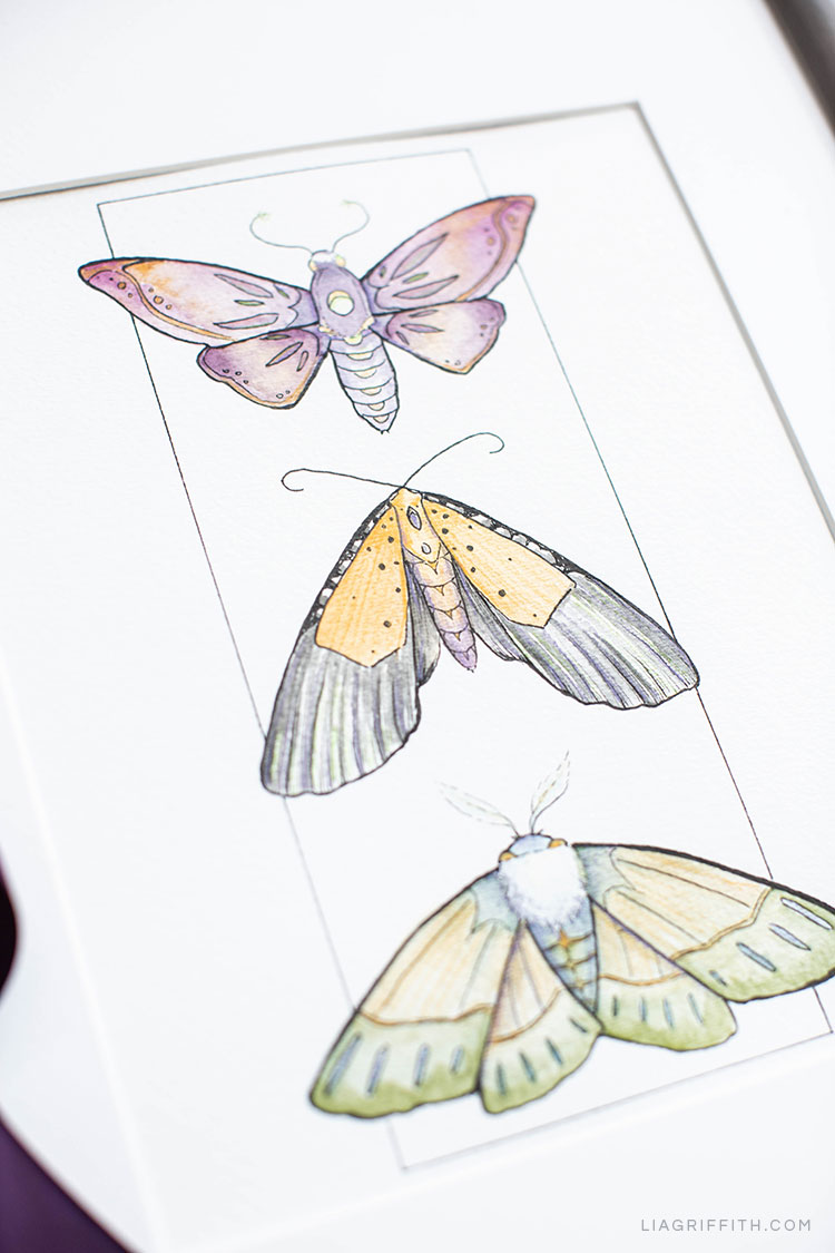 Halloween coloring pages with moths