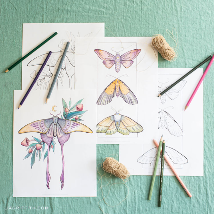 Elegant Moths Halloween Coloring Pages