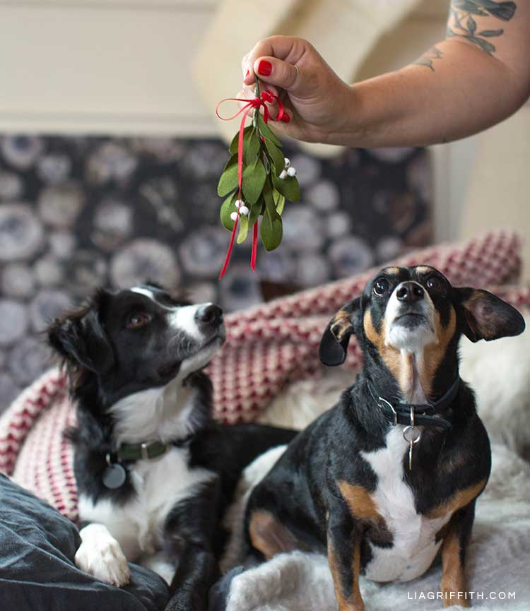Two dogs looking up at person holding DIY mistletoe