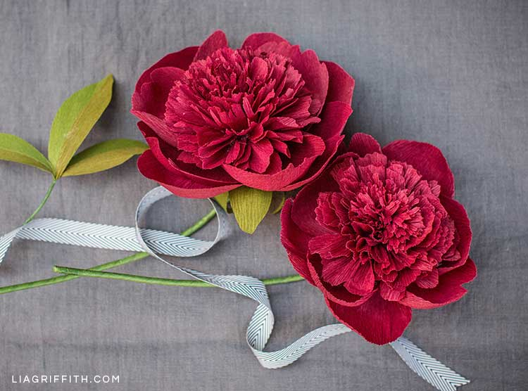 crepe paper red charm peony flowers on grey background with ribbon