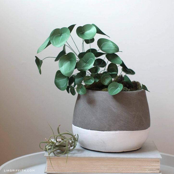 Paper money plant