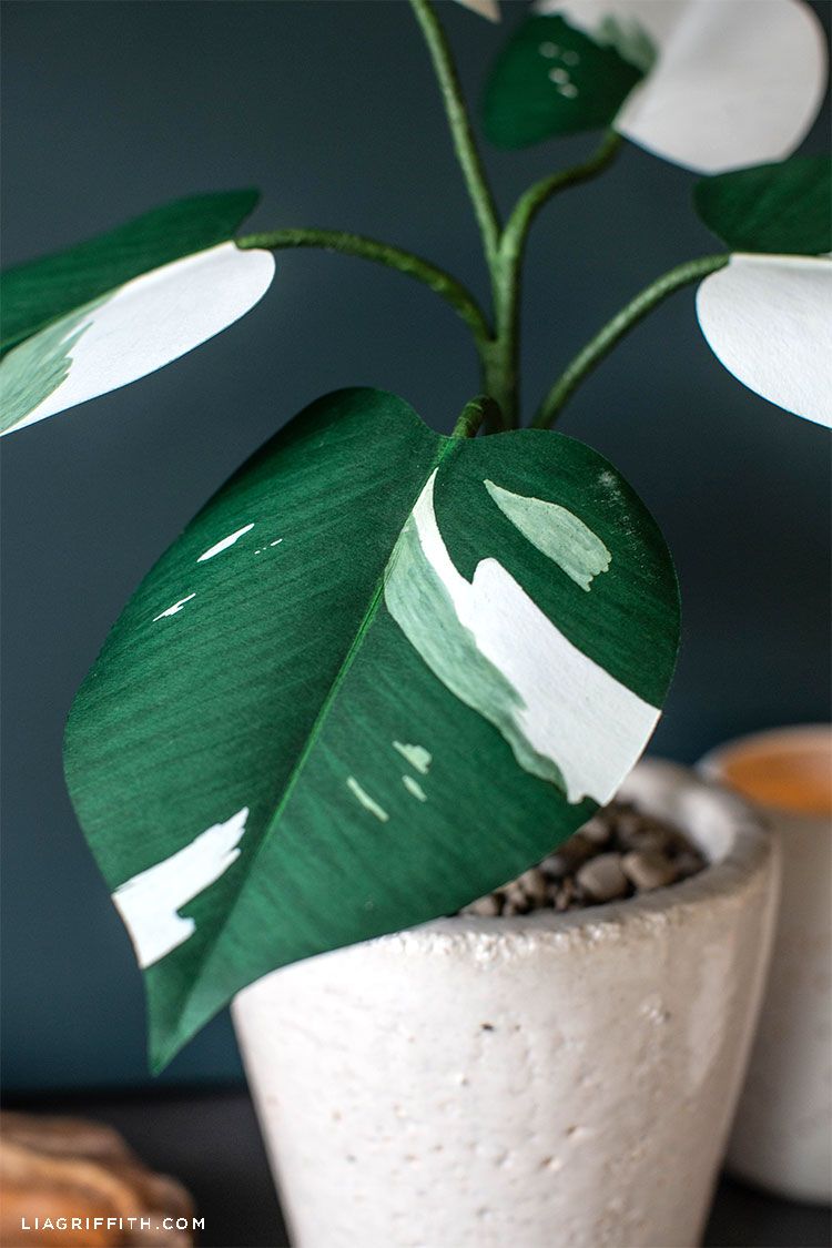 paper White Knight Philodendron