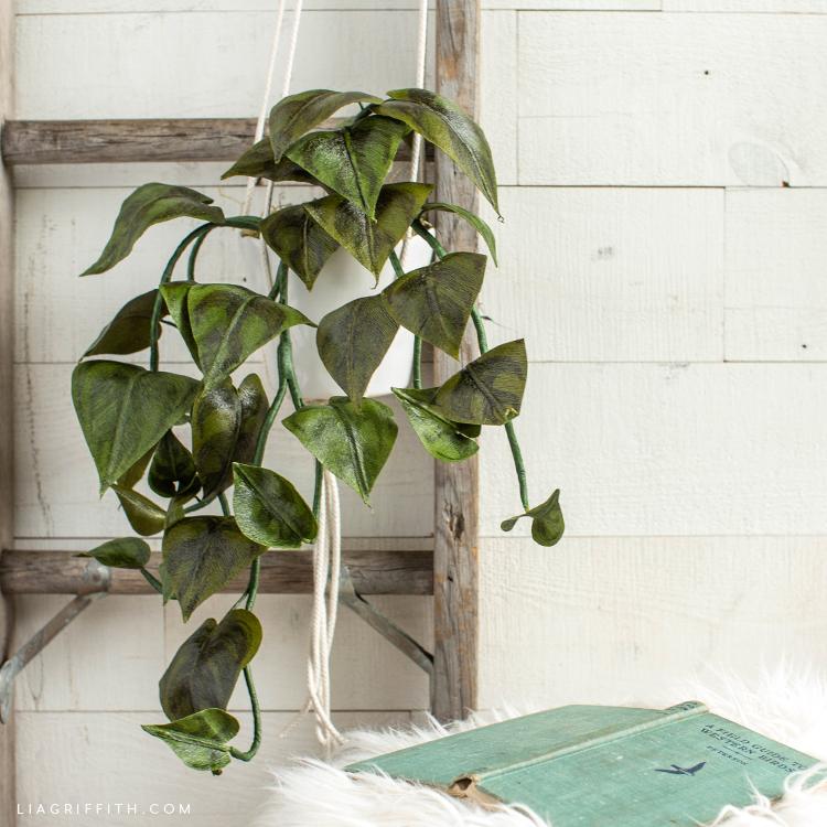 crepe paper heartleaf philodendron hanging on ladder