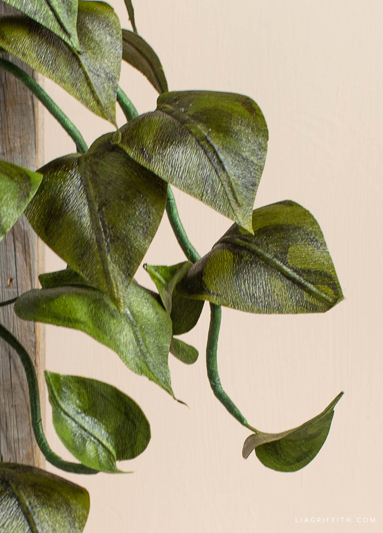 crepe paper heartleaf philodendron