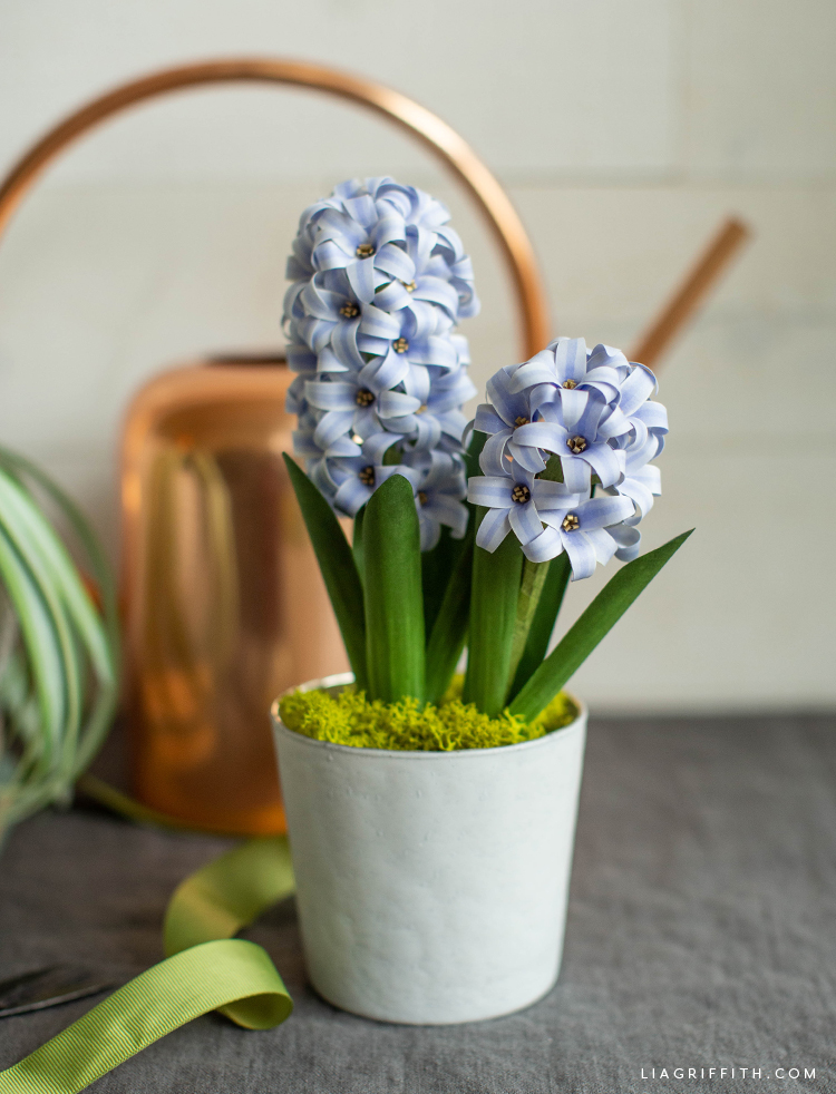 potted frosted paper hyacinth flowers in front of copper watering can
