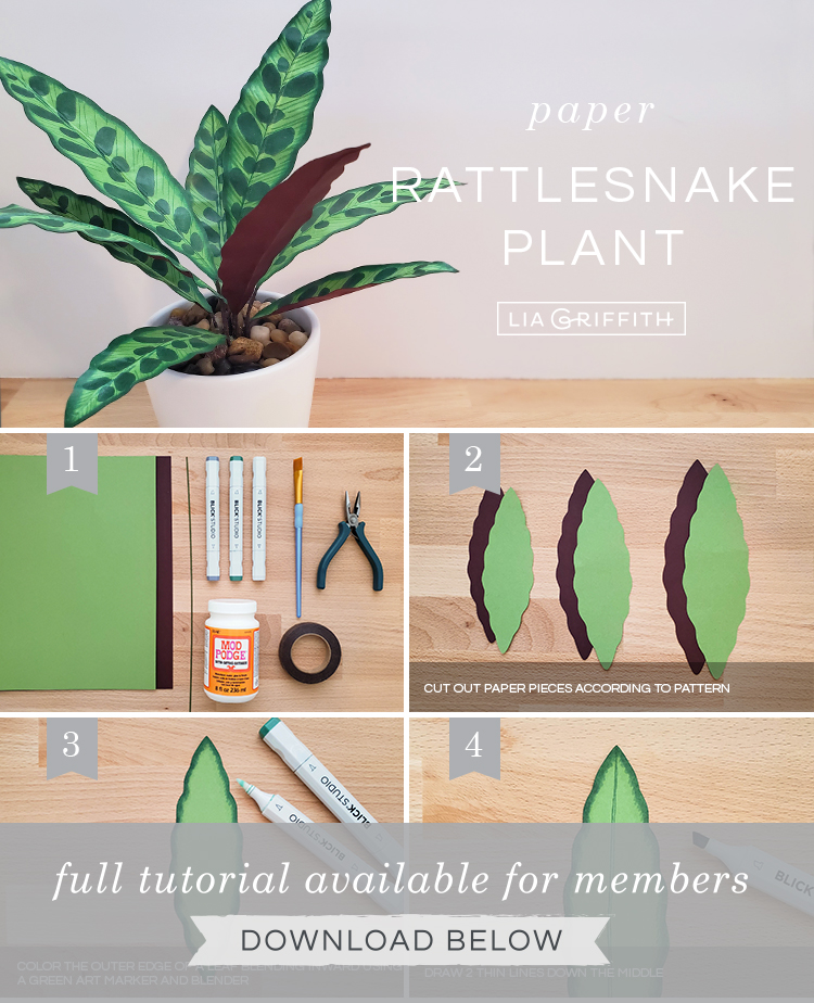 DIY photo tutorial for paper rattlesnake plant by Lia Griffith