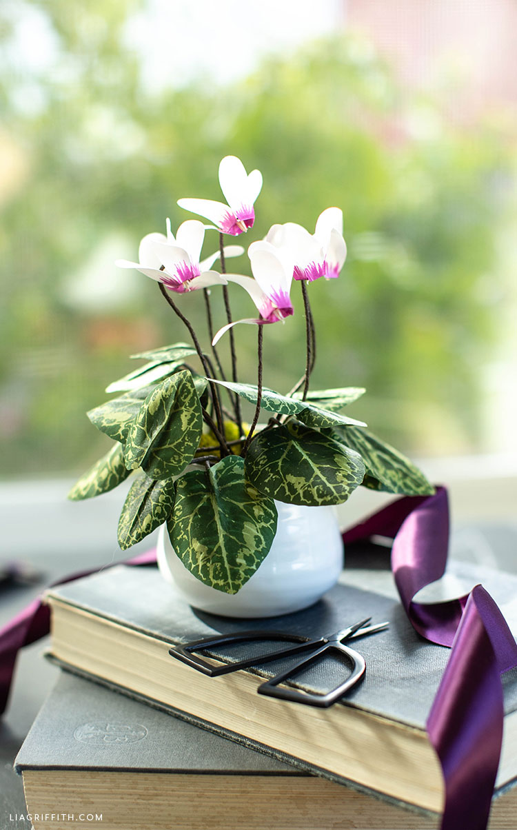 frosted paper cyclamen plant in pot on book in front of window
