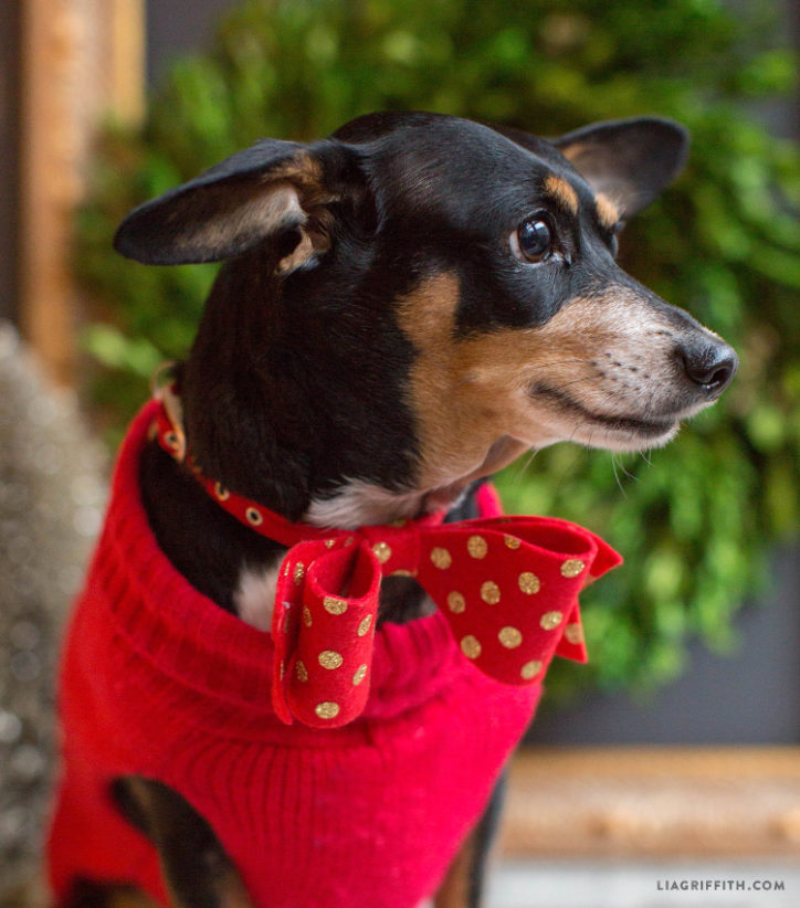 DIY bow tie for dog
