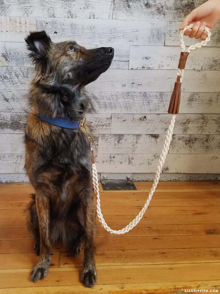 DIY braided rope dog leash