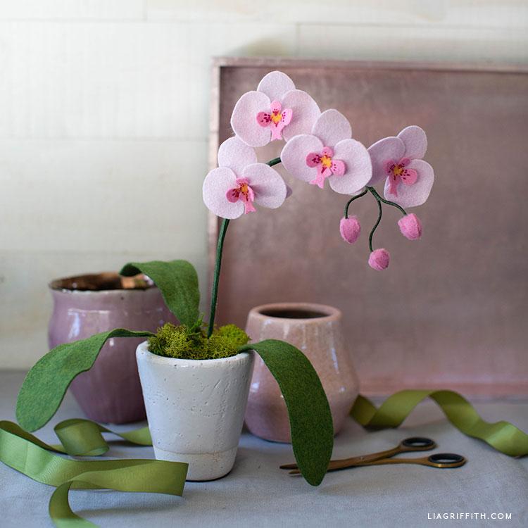 felt orchid plant