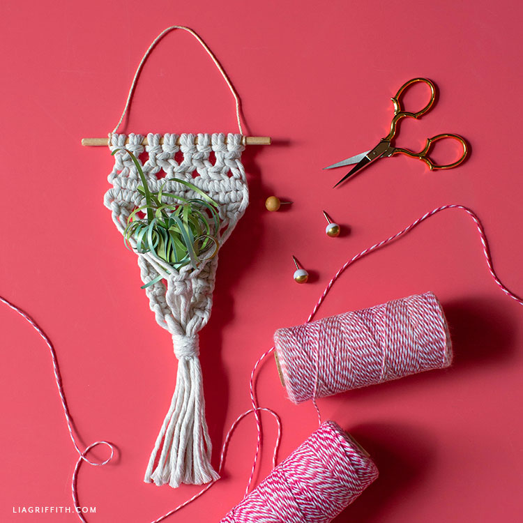 macrame air plant holder with paper air plant