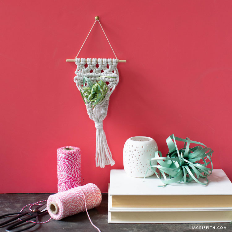 DIY macrame air plant holder