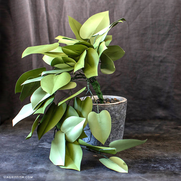 potted paper heartleaf philodendron