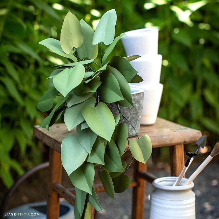 paper heartleaf philodendron