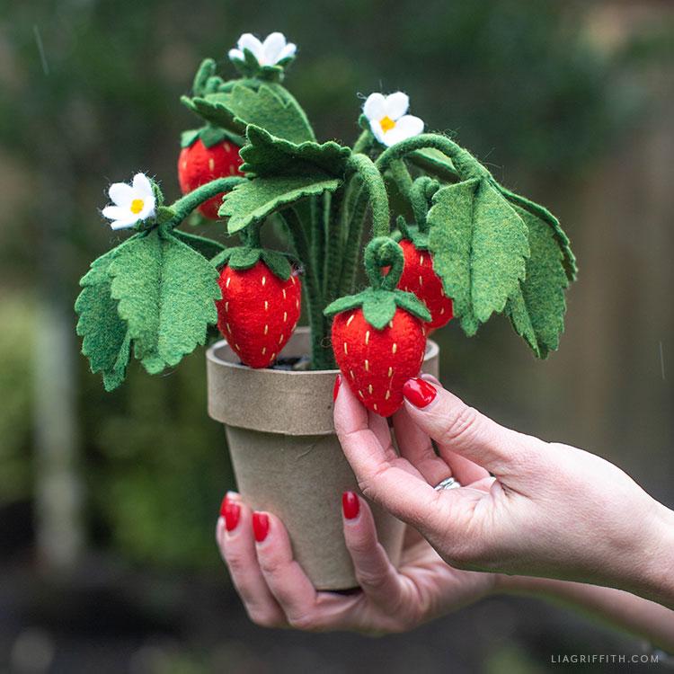 felt strawberry plant