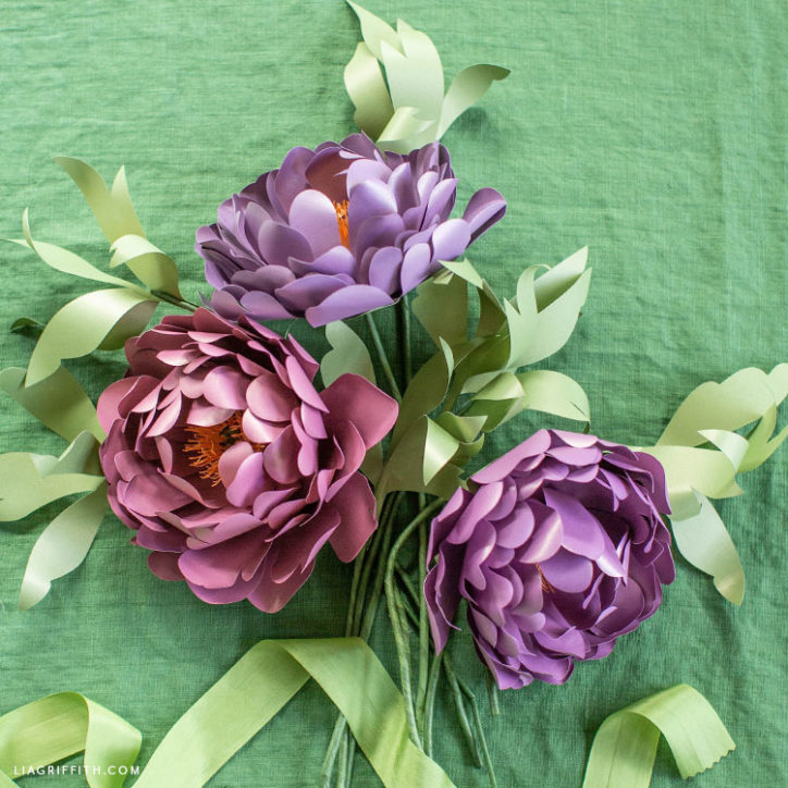 frosted paper heirloom peonies