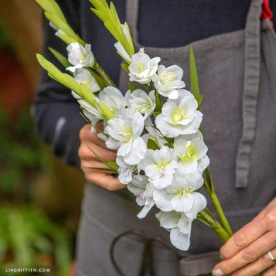 June Member Make: Crepe Paper Gladiolus