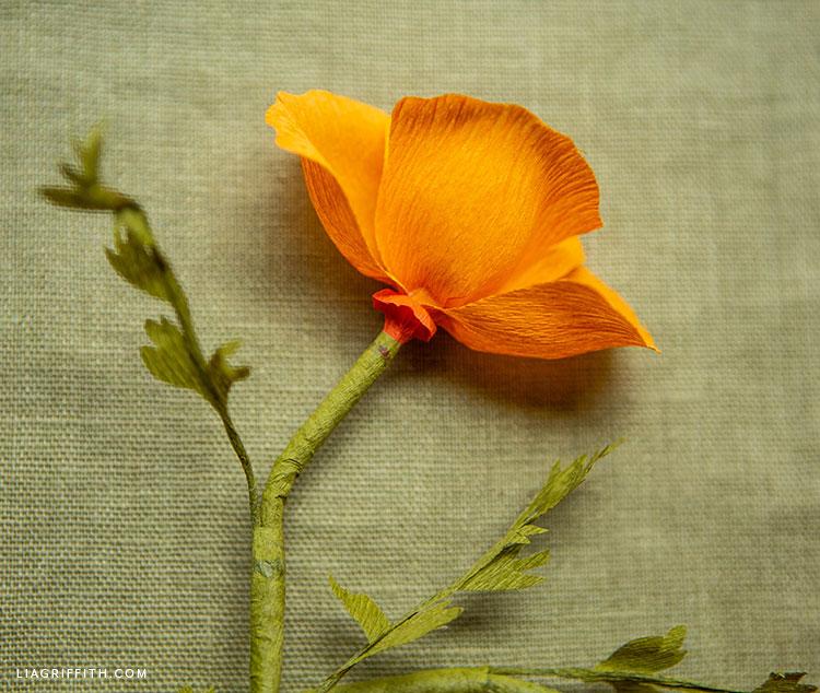 orange crepe paper California poppy