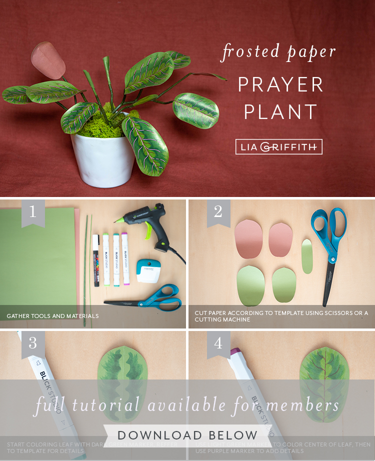 Photo tutorial for frosted paper prayer plant by Lia Griffith
