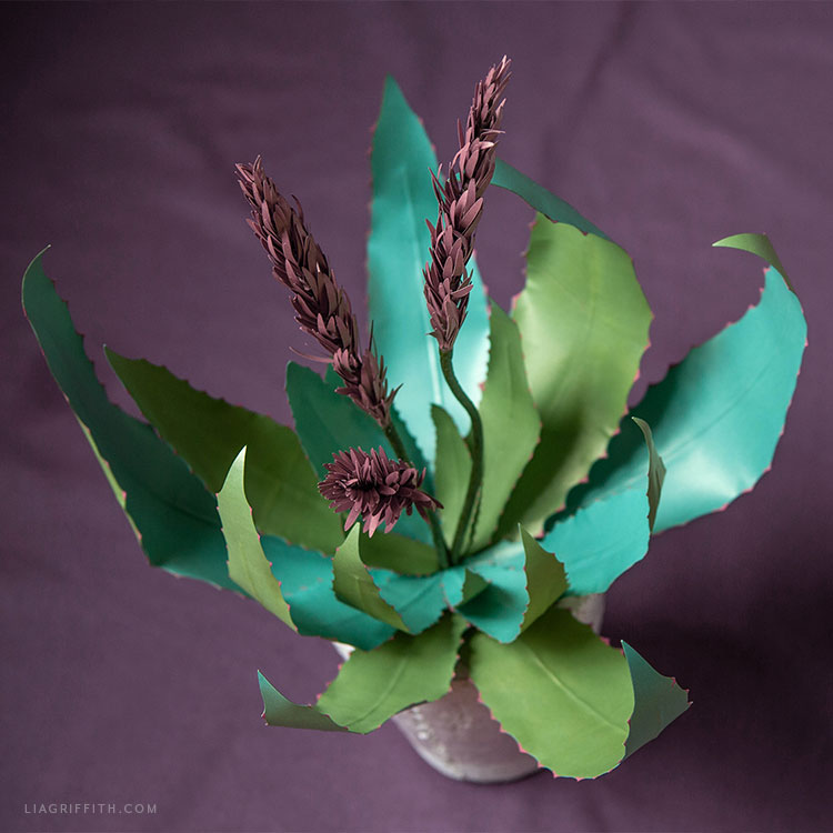 frosted paper blooming aloe plant