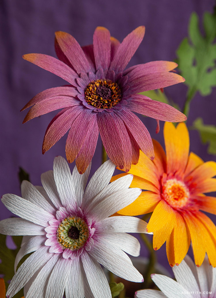 handmade and hand-colored crepe paper African daisy flowers