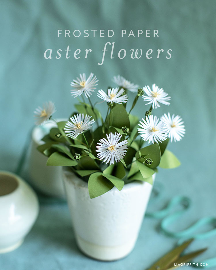 frosted paper aster flowers