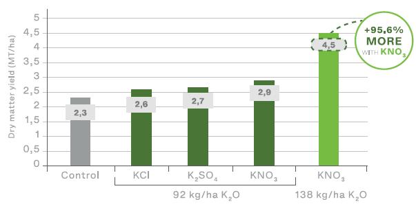 Nitrato de potasio en tomate, mejora el tamaño de la fruta y el color