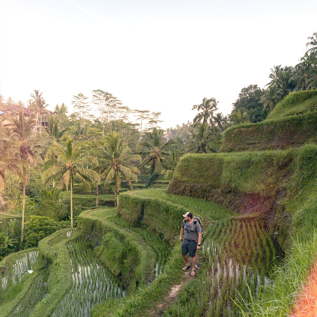 Tegalang Rice Terraces: The rice terraces of Ubud have risen in popularity the last few years. For almost an hour I wandered around these beautiful terraces alone, listening to the many beautiful birds and insects that inhabit the area.