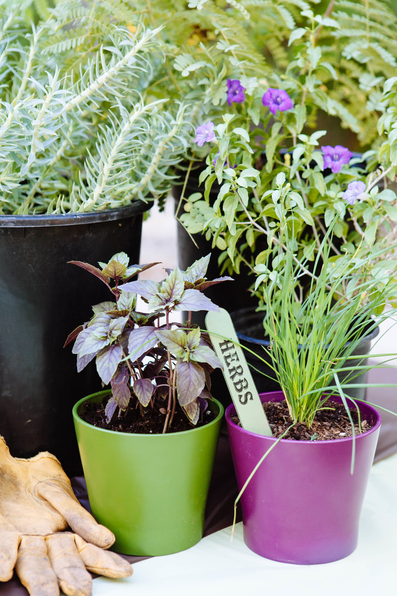 Garden Bush: Making Your Herb Garden Grow