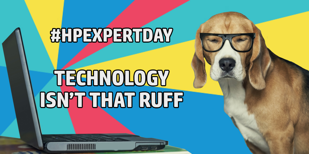 hp expert day meme