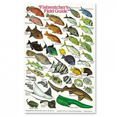 Fishwatcher`s Field Guide ID Card