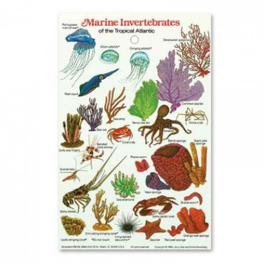 Marine Invertebrates ID Card