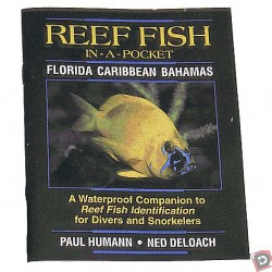 Reef Fish Pocket Guide