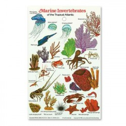 Image from Marine Invertebrates ID Card