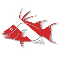 Image from Dive Flag Hogfish Decal