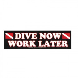 Image from Dive Now Bumper Sticker