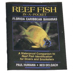 Image from Reef Fish Pocket Guide