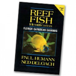 Image from Humann Reef Fish ID