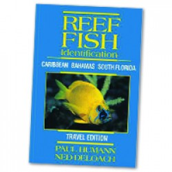 Image from Reef Fish Identification Book Travel Edition