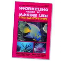 Image from Snorkeling Guide To Marine Life