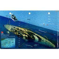 Bibb 3D Dive Card