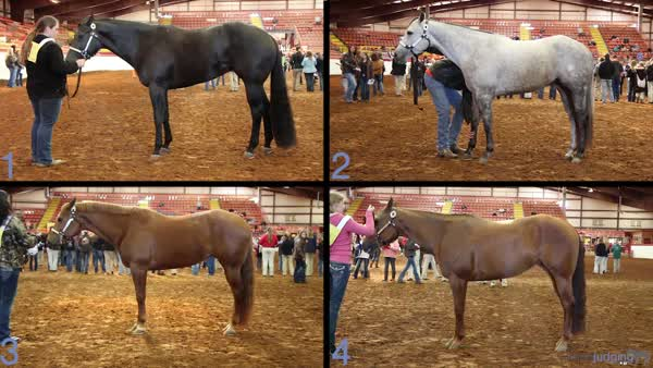 2014 Johnson County Horse Judging