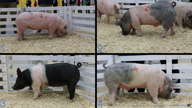 2018 2018 National 4H