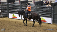 2018 2018 San Antonio Horse