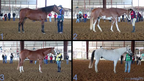 2019 2019 Navario Horse Judging Mini-Contest