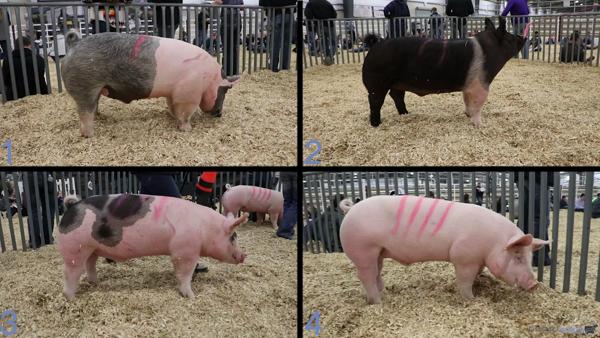 2019 San Antonio Livestock