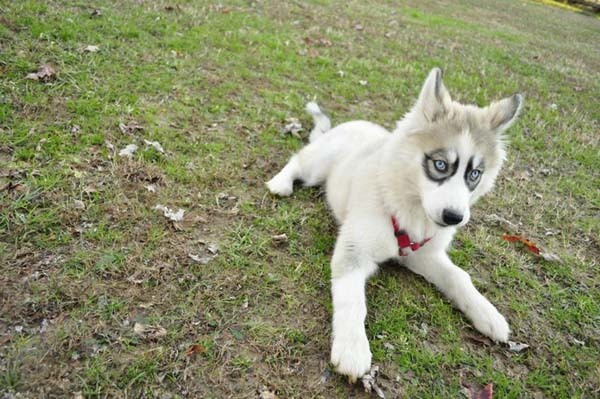 These 20 Rare Dog Breeds With Unusual Markings Will Make You Want One ... Unique Looking Dog Breeds