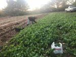 Black Soil: Our Better Nature