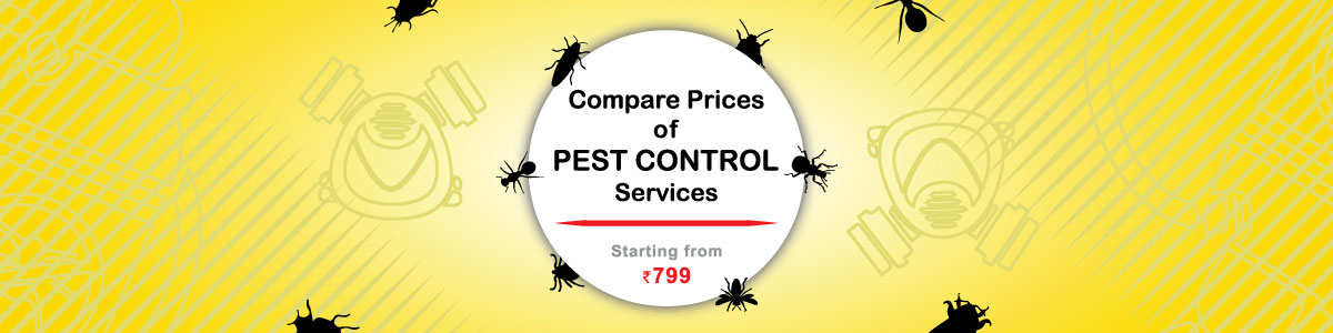 Find Best Pest Control Services