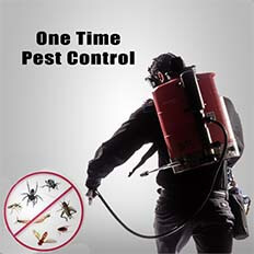 Pest Control - One time